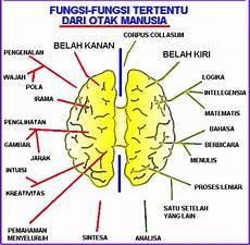 Ar Riyani Anatomo Dan Fungsi Otak Manusia