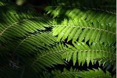Pflanzen Für Dunkle Ecken In Der Wohnung - pflanzen f 252 r dunkle ecken zuhausewohnen