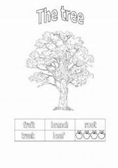 parts of a tree worksheets