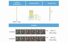 illumina ngs sequencing next generation sequencing ngs molecular biology