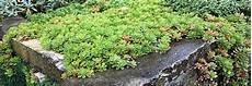 elpflanzen und hängepflanzen garten steingarten bepflanzen hier finden sie passende pflanzen