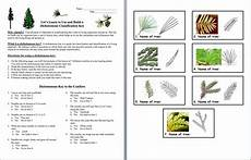 plant kingdom worksheets for grade 2 13758 animal worksheet new 694 animal classification worksheet middle school