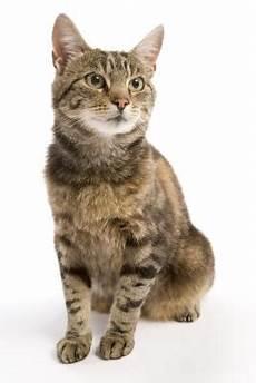 Was Braucht Eine Katze - do cats menstruate pets