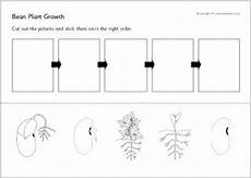 plant growth worksheet for grade 2 13757 bean plant growth sequencing sheets sb9535 sparklebox homeschooling plants