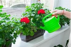 pot de fleurs extérieur 76170 fleurs impatiens arrosage