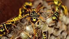 Wespen Vertreiben Hausmittel - wespen vertreiben mit diesen tipps und hausmitteln