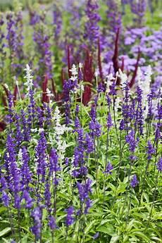 Sommerblumen Im Staudenbeet Gartenzauber