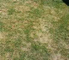 Vertrockneter Verbrannter Rasen Was Tun Wie Schnell