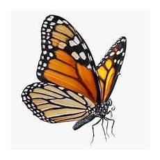Butterfly 3d Models For Turbosquid
