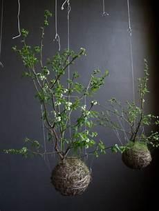 dekoration zum aufhängen deko mit bonsai pflanzen moosb 228 lle zum aufh 228 ngen selber