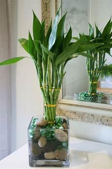 bambou d intérieur bambou d int 233 rieur comment cultiver cette plante exotique