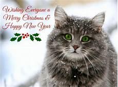 merry christmas cat abstract background wallpapers desktop nexus image 1638068
