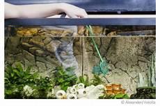 aquarium richtig reinigen so einfach geht s tipps