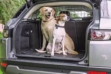hunde sicher im auto transportieren 187 tierischehelden