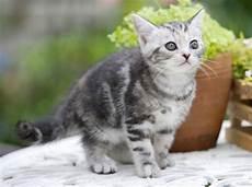 Katze An Freigang Gew 246 Hnen So Sieht Die Vorbereitung Aus