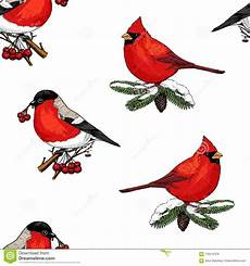 seamless pattern holly and bullfinch cardinal birds merry christmas or new year