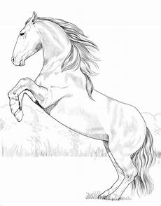 lusitano coloring page desenho de cavalo lusitano