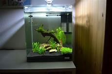 nano aquarium 30l mein 30l nano cube aquarienvorstellung der wirbellotse