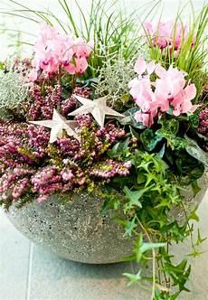 herbstblumen balkon winterhart winterbl 252 versch 246 nern die adventszeit gawina