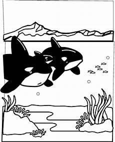 Malvorlagen Meerestiere Liste Meerestiere Malvorlagen Malvorlagen1001 De