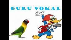 Gambar Kartun Burung Pelatuk Wallpaper Hq Collections