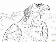 coloriage portrait d un aigle royal coloriages 224