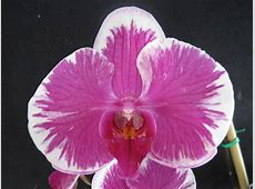 how much water do orchids need
