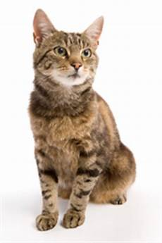 cats bringing an animal into u s importation cdc