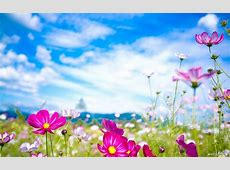 Spring Backgrounds   HD Backgrounds Pic