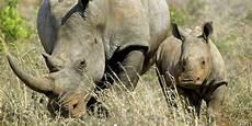 les animaux en voie de disparition esp 232 ces en voie de disparition 60 des herbivores