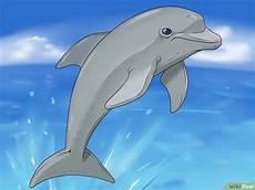 Gambar Ikan Lumba Lumba Kartun Hitam Putih Gambar Ikan Hd