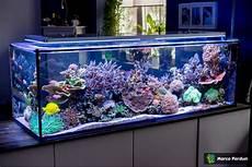 Ein 400l Raumteiler 150x50x50cm Seite 7 Aquarium