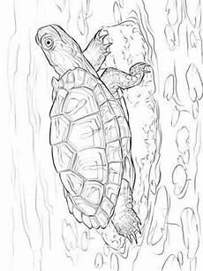 Ausmalbilder Reptilien Malvorlagen N De 14 Ausmalbilder Schildkr 246 Ten