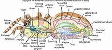 Biologi Education Arachnida