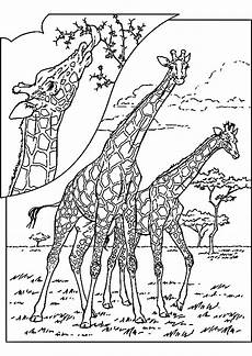 Www Ausmalbilder Info Malbuch Malvorlagen Tiere Frisch Malvorlagen Tiere Einhorn Malvorlagen Mandala