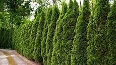 pflanzen für hecke nat 252 rlicher sichtschutz hecken richtig pflanzen ndr de