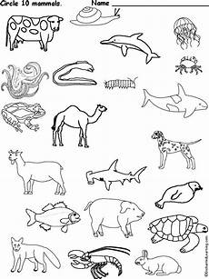 groups of animals coloring pages 17000 circle the mammals homeschooling science circles the o jays and mammals