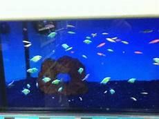 neon fish in a blacklight tank yelp