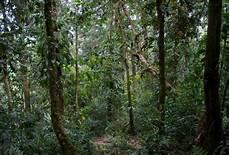 Semua Pihak Perlu Lindungi Hutan Simpan Kekal Wan
