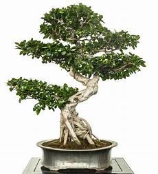 alle artikel 252 ber indoor bonsai