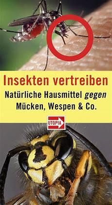 mücken im zimmer finden insekten vertreiben nat 252 rliche hausmittel gegen m 252 cken