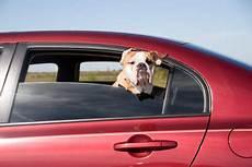 mittel gegen hundegeruch hundegeruch im auto mit hausmitteln entfernen