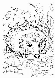 hedgehogs free printable coloring and activity page for