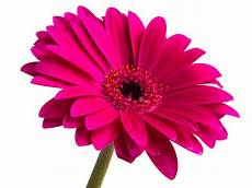 Free Clipart Image Of Flower flower free images at clker vector clip