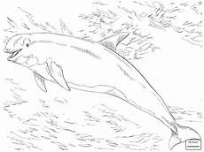 dolphin jumping drawing at getdrawings free