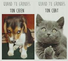 chat vs chien humour
