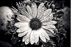 30 black and white pictures of flowers with tips on how to
