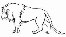 Gambar Hewan Singa Hitam Putih Gambar Hewan