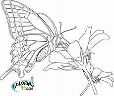 Ausmalbilder Blumen Schmetterlinge Butterfly Coloring Pages Team Colors