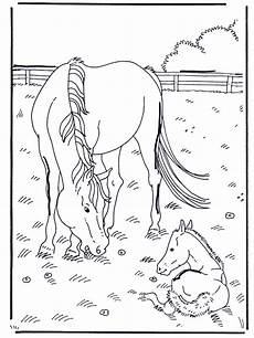 Ausmalbild Pferde Fohlen Pferd Und Fohlen Ausmalbilder Pferde